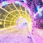 Is the Toronto Light Festival free?