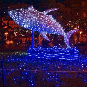 Festival of Lights San Diego