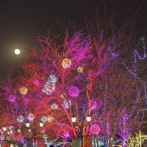 James Island Festival of Lights