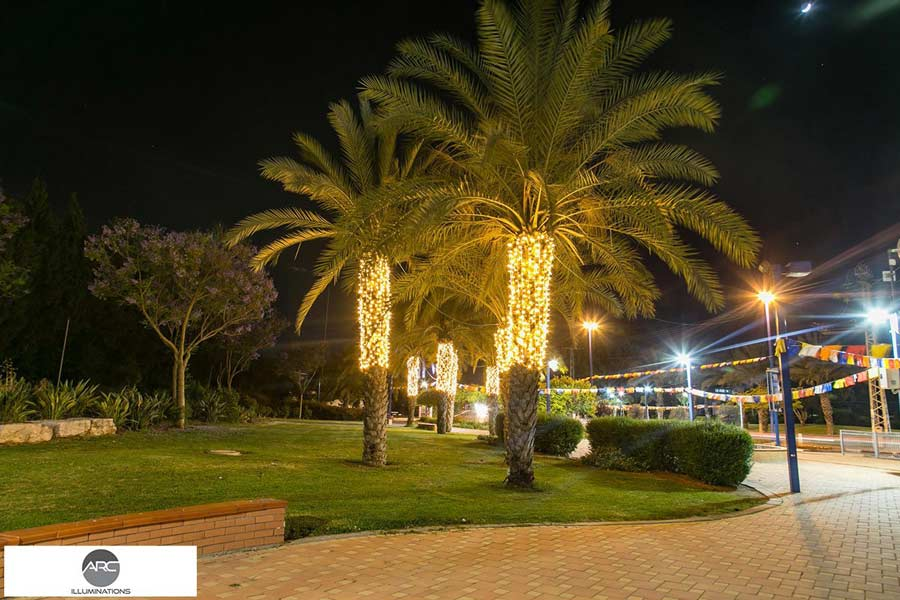 plam tree lights