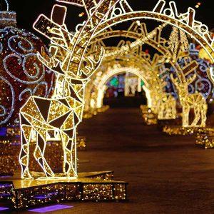 Aurora festival of lights costs